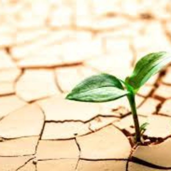 Conscious Service and The Entrepreneurial Spirit